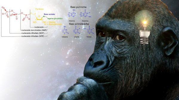 Gorilla Scimmia Pensante