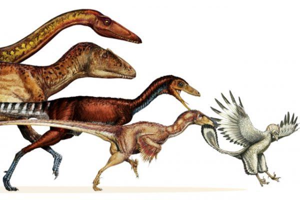 Dinosauri evoluzione